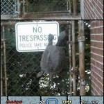 Koopa on a fence in real life [pic]