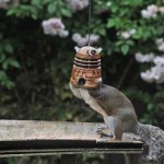 Squirrel Eats From Doctor Who Dalek Bird Feeder [pic]