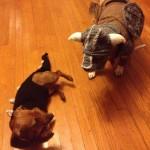 Doggie Skyrim Cosplay [pics]