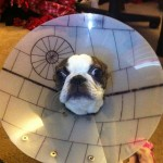 Star Wars Death Star Dog Cone [pic]
