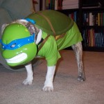 Dog in Teenage Mutant Ninja Turtles Cosplay [pic]