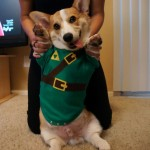 Cute Corgi in Legend of Zelda Link Cosplay [pic]